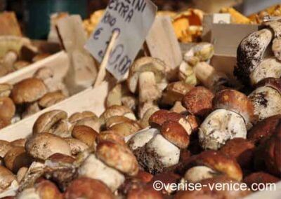 Vue plongeante sur les petits champignons italiens