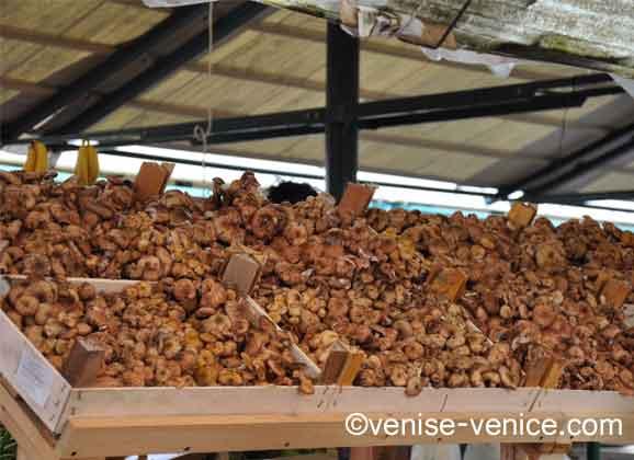 Un étal de funghis porcinis sur le marché du rialto